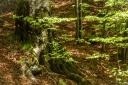 rifugio-segavecchia-foresta-appennino-bolognese-faggio