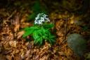 rifugio-segavecchia-foresta-appennino-bolognese-fiore