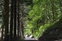 rifugio-segavecchia-foresta-appennino-bolognese-strada